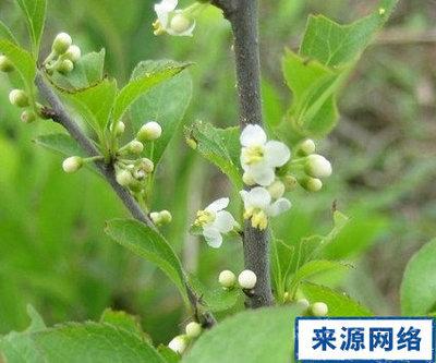 https://www.nlmy.com.cn/yaocai/vssv0v.html