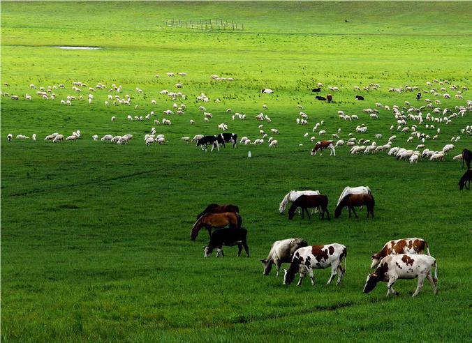 吉林:打造具有吉林特色的现代畜牧业