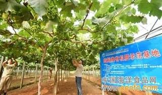 天津:工厂化养殖蚯蚓变废为宝价值高 小蚯蚓是个大生意