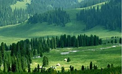 我国林业产业产值23年增加53倍