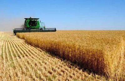 推进农业供给侧改革 完善农业政策