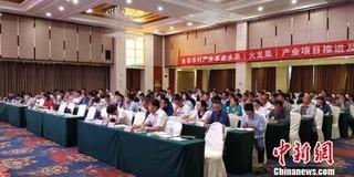 贵州:火龙果让上万人跨出贫困行列