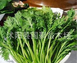 菠菜、茼蒿、西兰花等涨价 寿光蔬菜价格小幅上涨