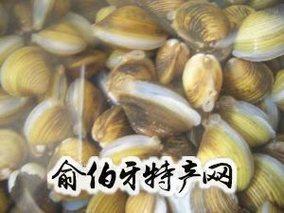 蛤蜊岛沙蚬