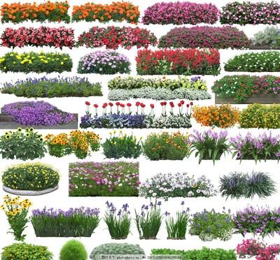 匍匐性或蔓生性本土地被植物的应用