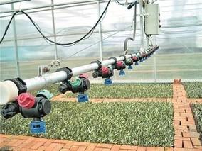地中海特产长成陇南致富树——甘肃陇南油橄榄产业发展纪实