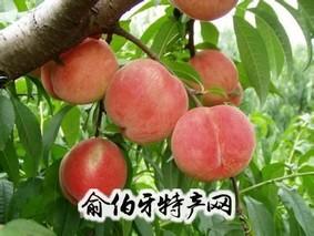 蒋福山水蜜桃