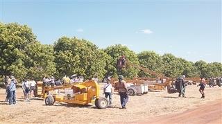 9月澳洲凯瑟琳地区将进行2015年*成熟芒果采摘