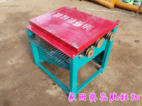 辽宁:大棚试种观赏型向日葵获得成功