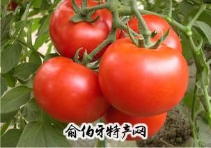 以色列144西红柿