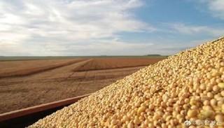 河北省万亩规模大豆平均亩产突破250公斤