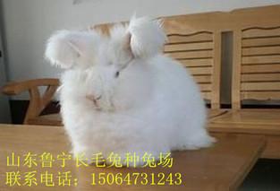 使毛用兔多长毛的十七种方法
