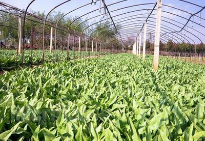 青岛优化农业政策性保险险种