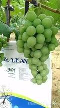 磷酸二氢钾如何用之——葡萄篇
