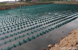 池塘养殖刺参的清淤与消毒