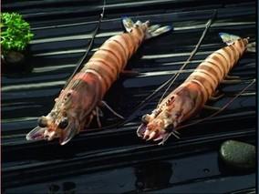 斑节对虾收获方法