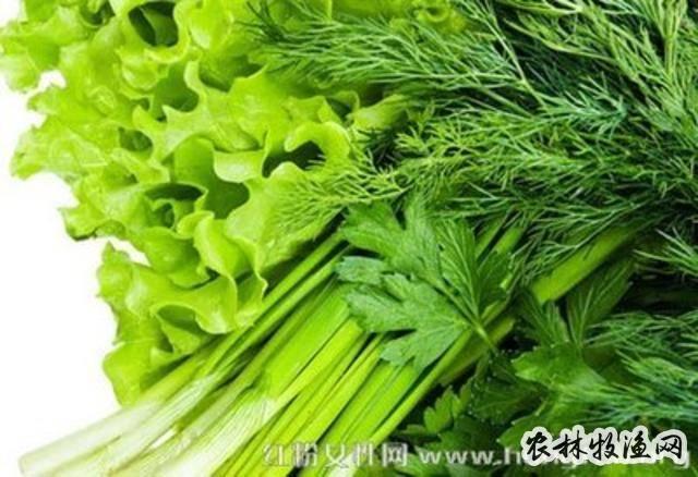 绿叶菜施肥技巧