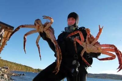 蟹种的捕捞