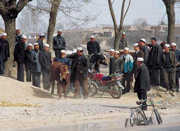 甘肃张永堂:扎根藏乡二十余载破解畜牧难题
