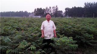 香椿产业技术研究院成立