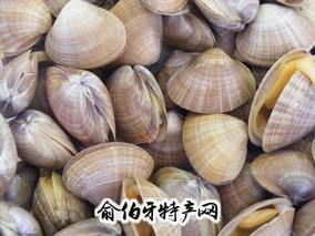 庄河杂色蛤