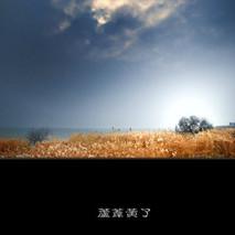 无锡沿太湖大堤千亩芦苇收割