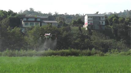 合川香龙镇:直升机喷洒农药防治水稻病虫害