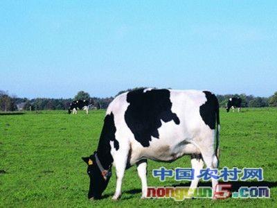 """现代牧业:扭亏为盈,成为奶业""""脱困样本"""""""
