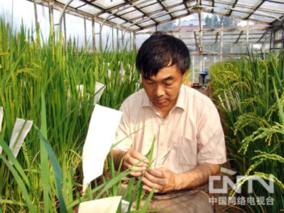 国家水稻育种栽培高级研修班在武汉开班