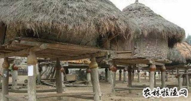 稻谷贮藏期间有哪些管理措施