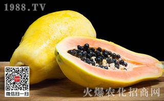 番木瓜种植怎么施肥好