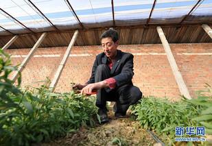 温棚内微灌设备的保养及其维护