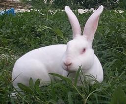 """冬季养兔有""""五抓"""""""
