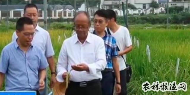 农业农村部:我国矮化水稻种植基本实现全覆盖