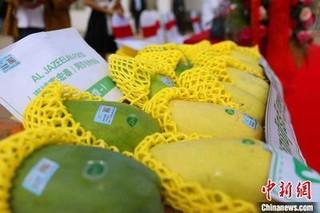 柬埔寨鲜芒果出口猛增