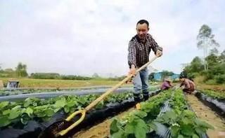 夏白菜大量上市 价格北低南高