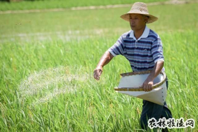 安徽:水稻侧深施肥增效益