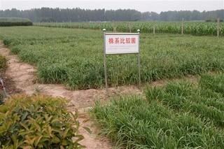 共同打造韭菜产业发展高地