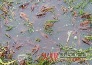 龙虾、蟹混养饲料配方