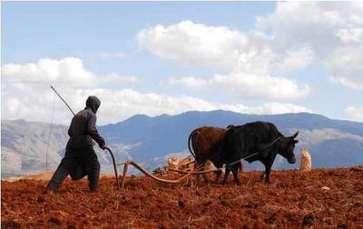 2018年十大具有影响力的农业政策