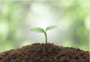 河南种植户用生物菌肥改良土壤