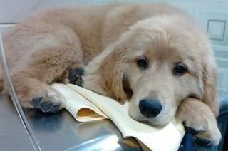 犬瘟热怎么防治?