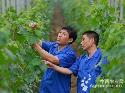 促农民工返乡创业需政策支持