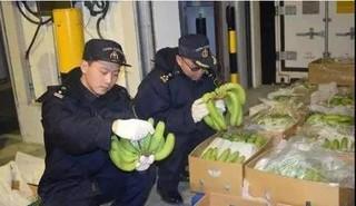 上海:中国市场首次迎来柬埔寨极速5分排列3水果 首批100吨香蕉抵沪