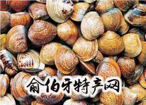 黄河口文蛤