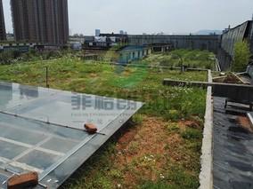 采用屋顶喷淋降温系统的效果如何?