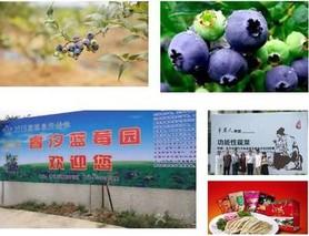 南京江宁淳化青龙打造农业电商产业街