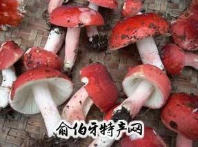 原生态红菇