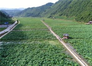 重庆:武隆乡村旅游季 捉泥鳅重拾童趣