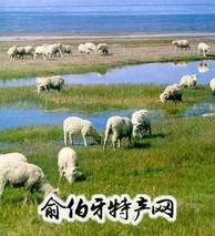 鄂尔多斯细毛羊